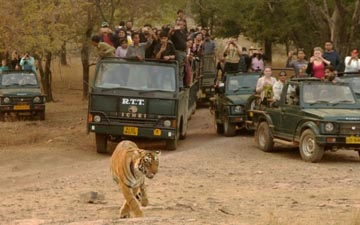 Premium Jeeps, Full day & Half day safari system in Ranthambhore!