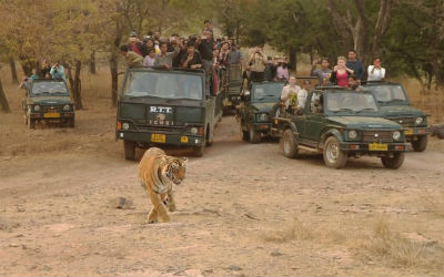 Ranthambore Safari Package