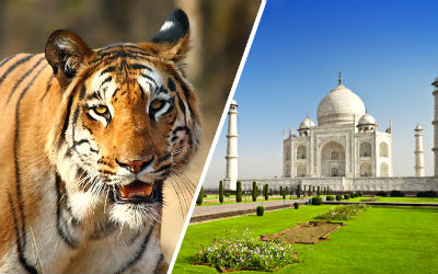 Rajasthan Wildlife Tour with Agra