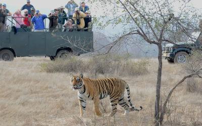 Ranthambore Full Day Safari
