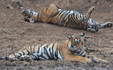 New Amendments in Full Day & Half Day Safaris