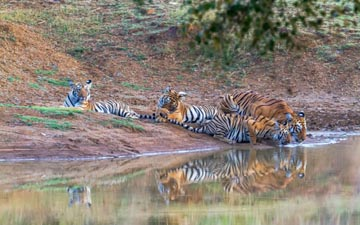 Tadoba National Park! Going high in Sightings