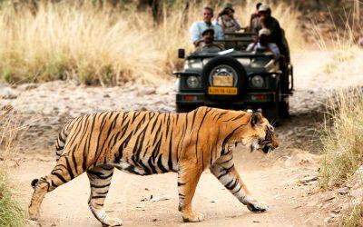 Jaipur Ranthambore Day Trip