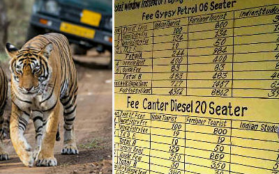 Ranthambore Safari Price 2019