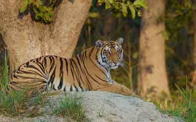 Uttar Pradesh Wildlife Tour