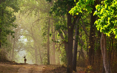 Wildlife Sanctuaries & National Parks in Madhya Pradesh