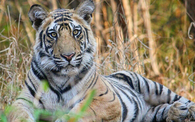 Bandhavgarh Safari Cost, Timing, Zones, Booking Info